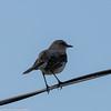 day 4 So FL Birding-369