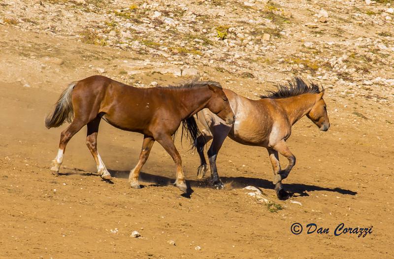 2 Mustangs-1aa.jpg