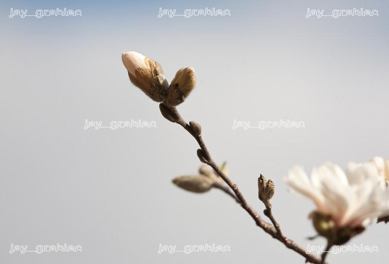 20100329_Flowers17.jpg