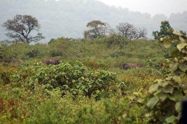 Arusha NP Safari, Tanzania
