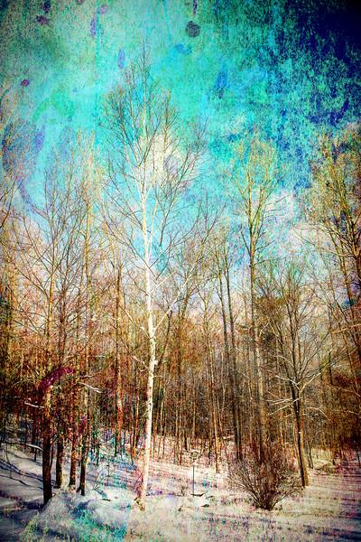 White Birch   #1042