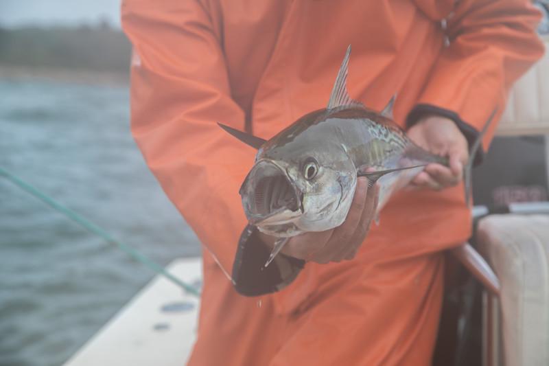 capecodfalsealbacoreflyfishing.fall18bcarmichael (5 of 44).jpg