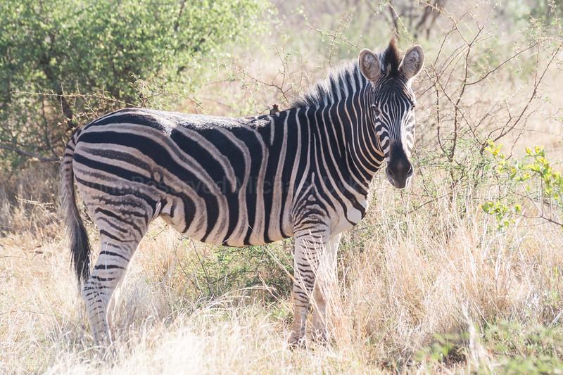 Madikwe-19.jpg