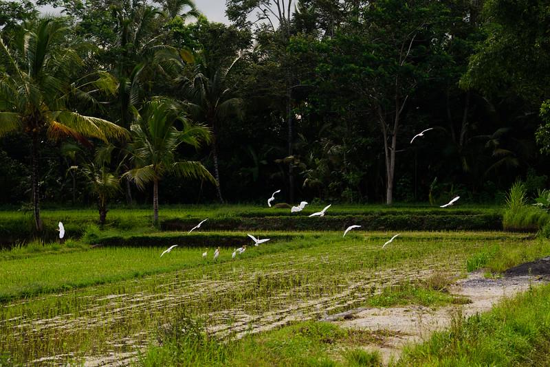 160217 - Bali - 2764.jpg