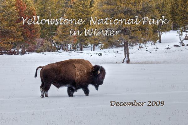 Yellowstone Winter 2009
