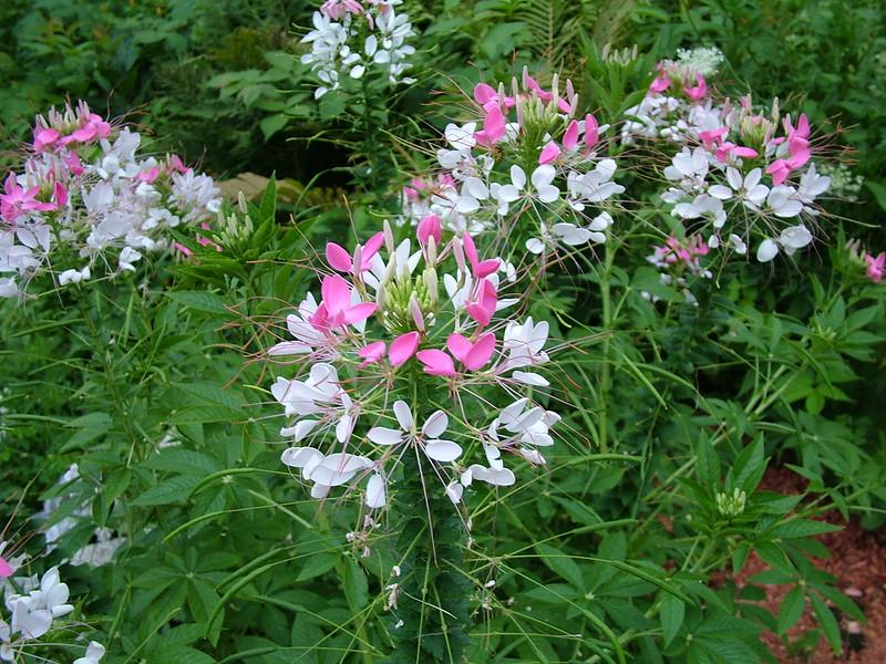 Flower  042.jpg