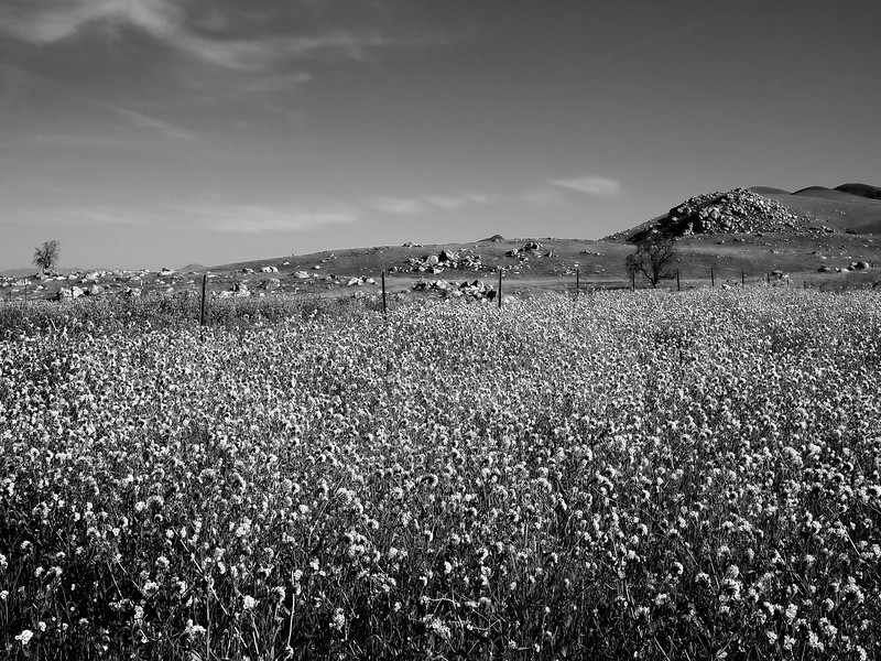 Wildflowers Monochrome