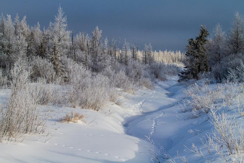 Hoar frost winter landscape CR133 Sax-Zim Bog MN  IMG_0004.jpg