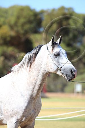 Best Head Stallion