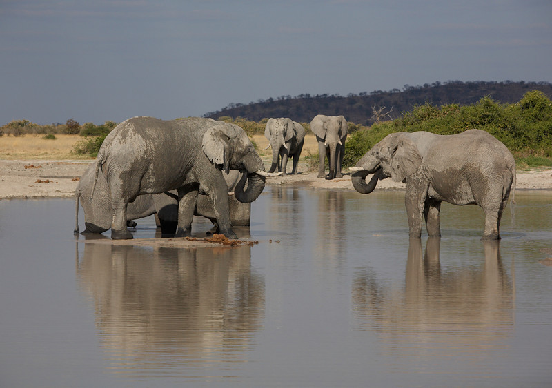 025 Elephants - 8905.jpg