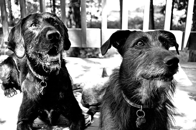 dog project 2 9-2-2012.jpg