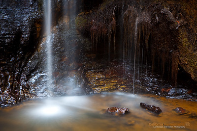 California: Big Basin Redwood State ParkP
