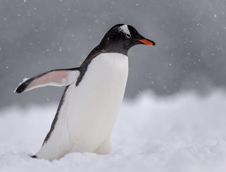 Antarctica-21042.jpg