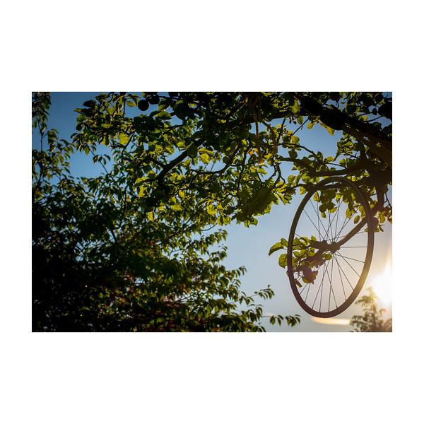 193_Wheel_10x10.jpg