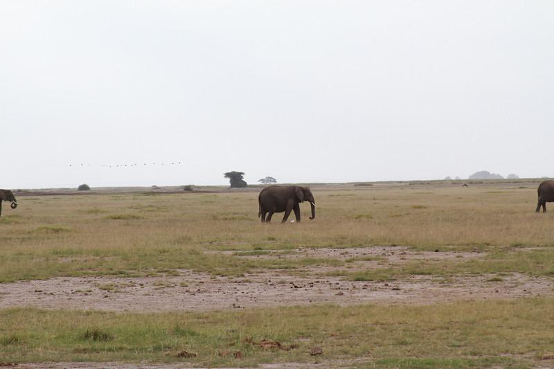 Kenya 2019 #2 307.JPG
