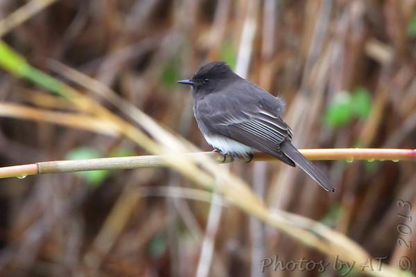 2013-01-04/05 Bentson State Park - Frontera Audubon