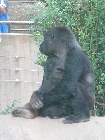 2010 National Zoo