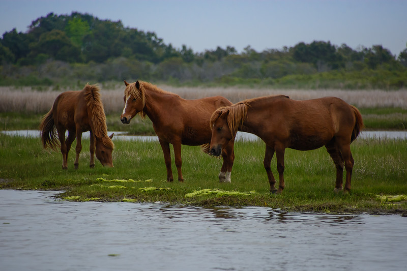 Assateague-3-153-ng.jpg