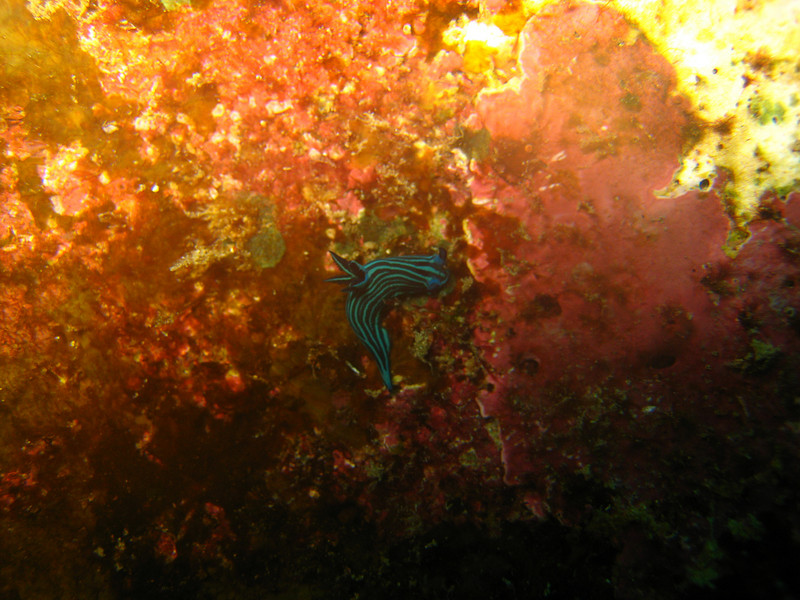 Diving in the Galapagos (320 of 392)
