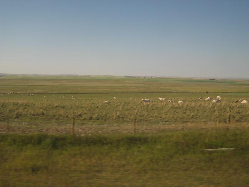 2008-07-24-YOCAMA-Montana_1763.jpg