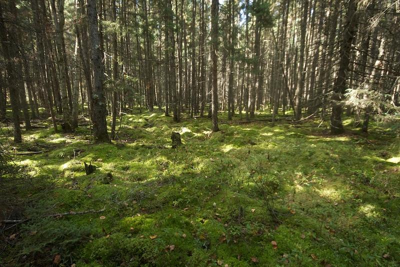 Winterberry Bog 3 Murphy Road Sax-Zim Bog MN.jpg