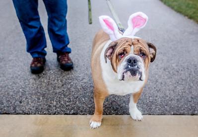20160323 - Dog Easter Egg (SN)