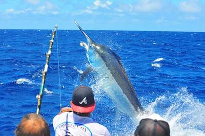 Last Chance Sportfishing, #4435
