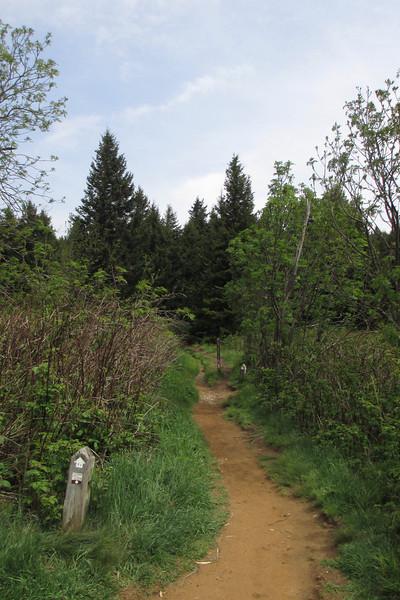 Art Loeb Trail (5,840')