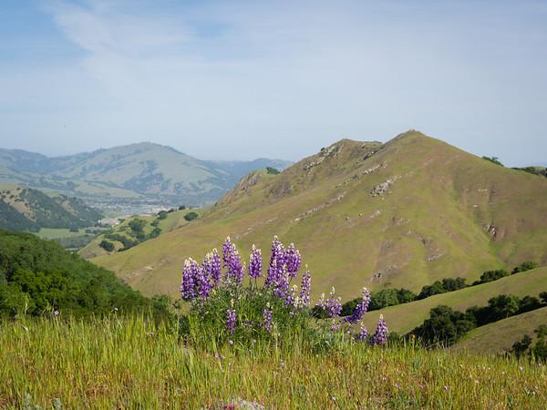 Sunol - Maguire Peaks hike