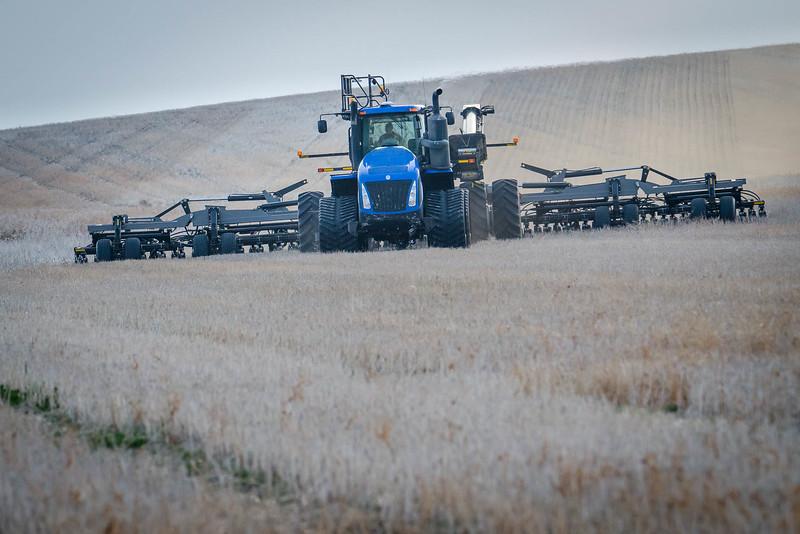 barley 3.jpg