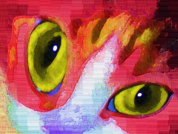 Fun Funky Cat's Eyes