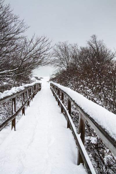 boardwalk to the beach, Parker River National Wildlife Refuge