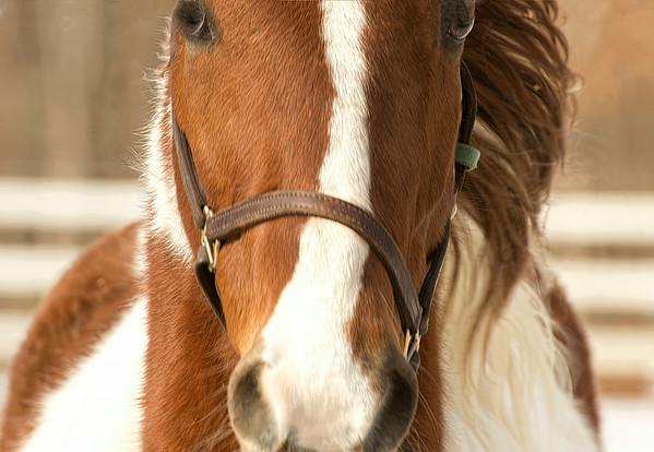 Tina Horses