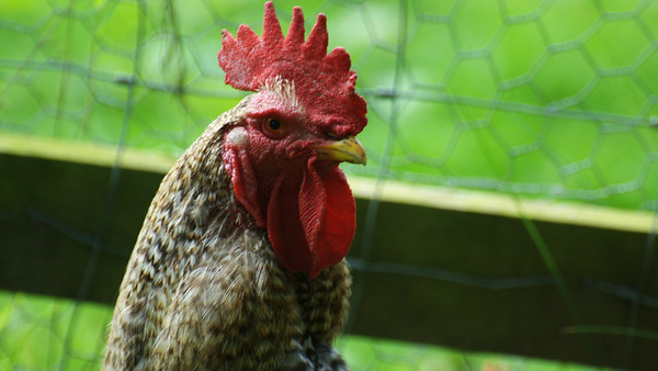 animals & birds we have seen in Scotland