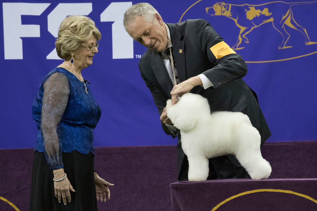 . Handler Bill McFadden shows Flynn, a bichon frise, to judge Betty-Anne Stenmark in the best in show competition during the 142nd Westminster Kennel Club Dog Show, Tuesday, Feb. 13, 2018, at Madison Square Garden in New York. Flynn won best in show. (AP Photo/Mary Altaffer)
