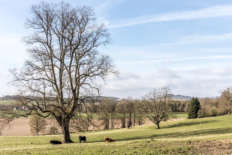 Perthshire59.jpg