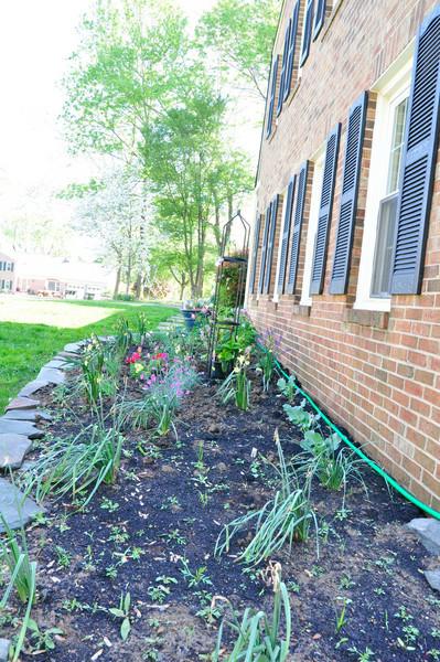 garden-0023.jpg