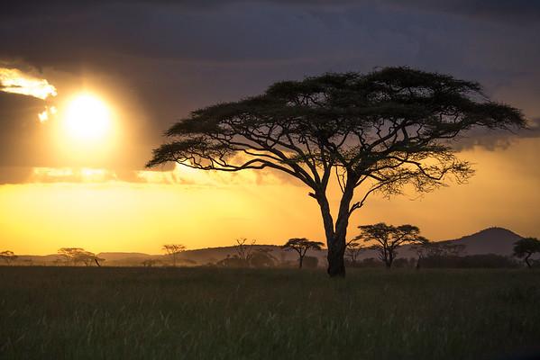 Tanzania safari 2015