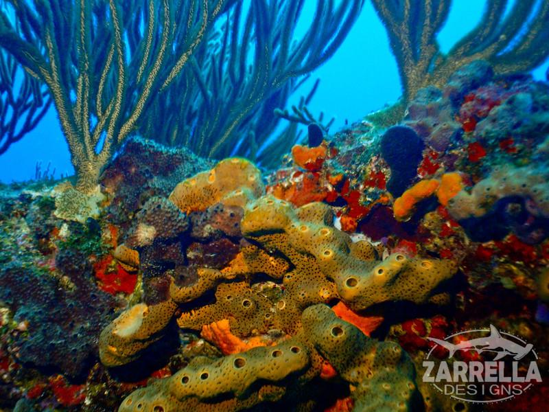 """""""Sponges"""" (Fishbowl Reef, St. Maarten)"""