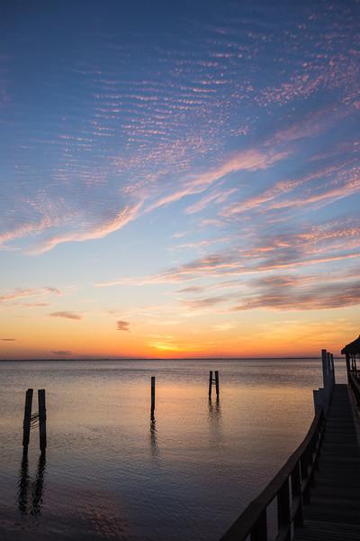 Tampa Landscapes-03404.jpg
