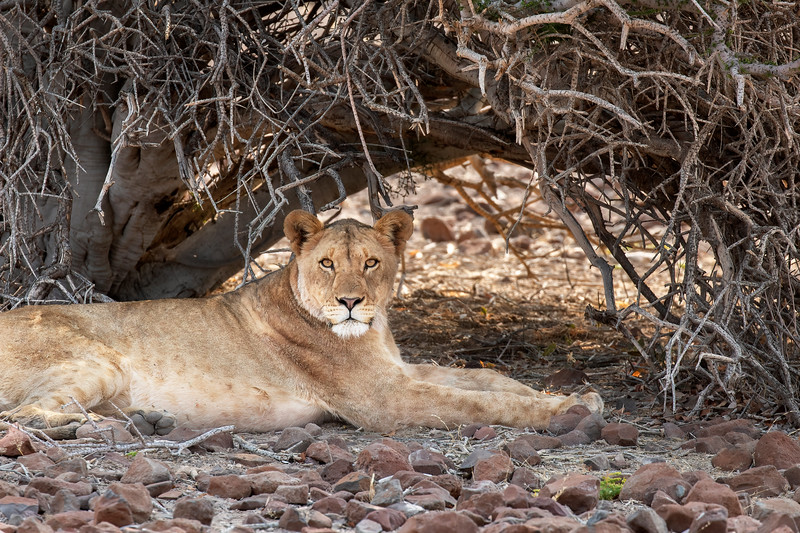 Namibia 69A6295.jpg