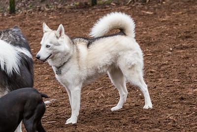 Jasper's Dog Park Feb 8 2015