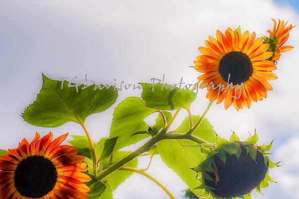 Jules Janick Horticulture Garden, 10/8/21