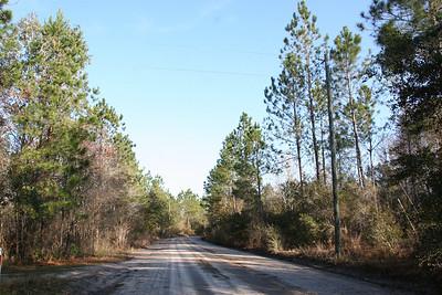 Florida Pine Property