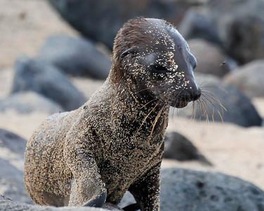 Ecuador/Galapagos-May 2015