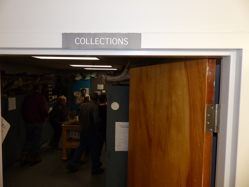 The Collections room