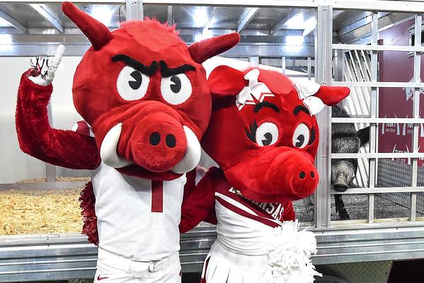 Hogs 2019 Football