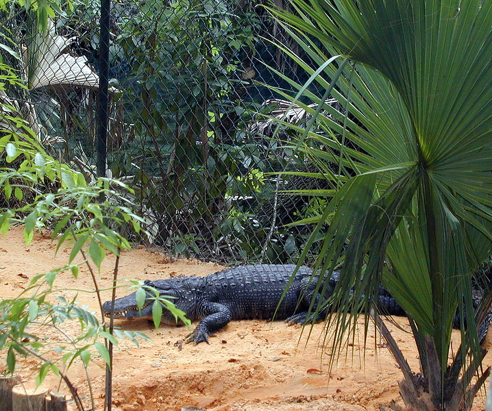Tarpon Springs Wildlife Park (2).jpg
