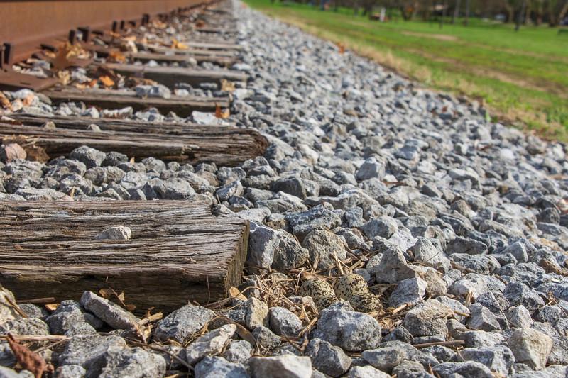 McKinley-4eggs-nest-railroadApril13.jpg