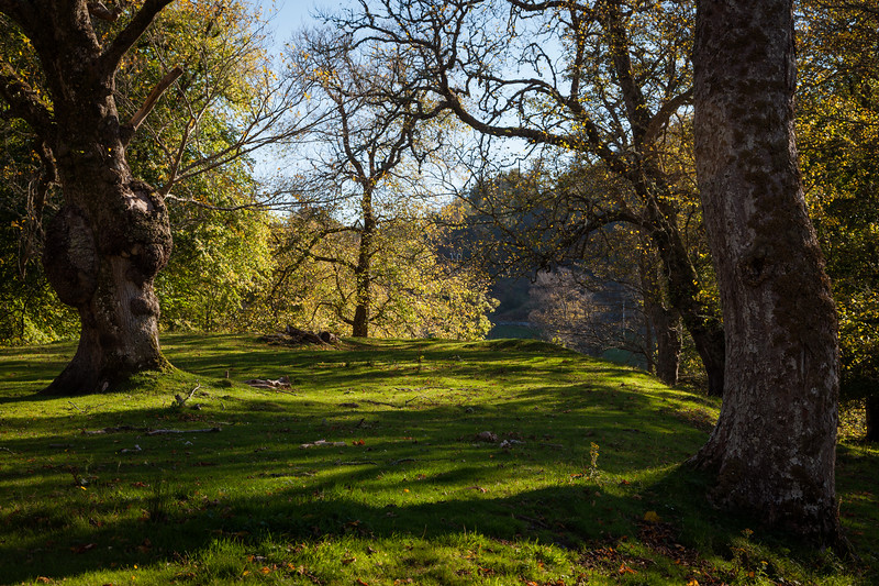 Gairloch Woodland